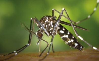 Vigilance | Carte du moustique tigre 2020